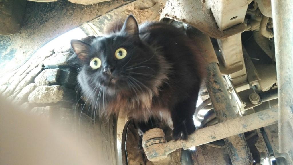 кот и джимни jimny